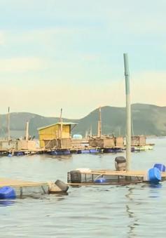 Phú Yên: Phân cấp xã trong quản lý hồ sơ, thống kê số lượng nuôi trồng thủy sản