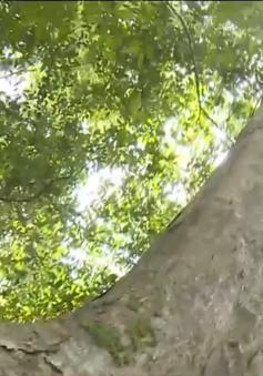 Quảng Nam cần có tiếng nói chung trong quản lý bảo vệ rừng