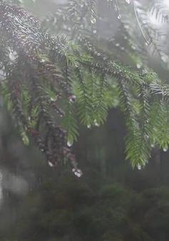 Những lưu ý khi du lịch Đà Lạt mùa mưa