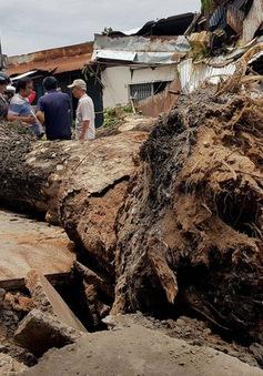Mưa lớn ở TP.HCM, hàng loạt cây xanh ngã đổ