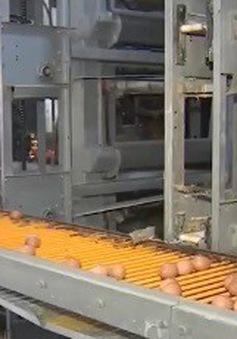 Thị trường rộng mở với trứng công nghệ cao