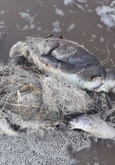 Dư luận phẫn nộ với clip rùa biển bị sát hại