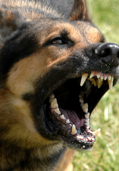 Chó nhà cắn nhưng không tiêm phòng, một người tử vong vì bệnh dại