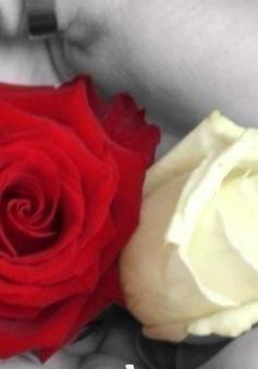 Ý nghĩa bông hồng cài áo mùa Vu Lan