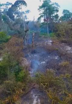 Khánh Hòa tập trung lực lượng chữa cháy rừng Khánh Thượng