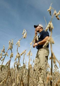 Bộ Nông nghiệp Mỹ chi 4,7 tỷ USD hỗ trợ nông dân