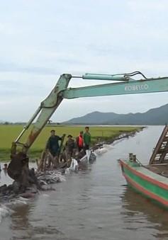 Vỡ đê bao ở An Giang, hàng trăm hecta lúa bị nhấn chìm