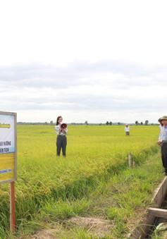 Hiệu quả mô hình nông nghiệp thông minh tại Quảng Trị