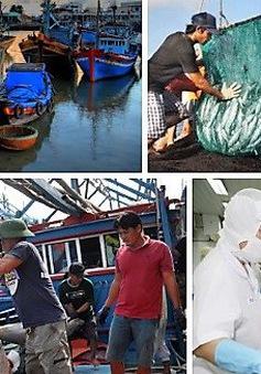 """Nỗ lực tháo gỡ """"thẻ vàng"""" của EC cho thủy sản Việt Nam: Cần cấp bách, quyết liệt và đồng bộ"""
