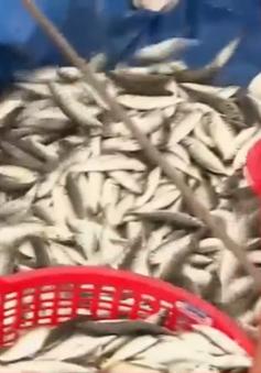 Truy xuất nguồn gốc thủy sản : Ý thức từ ngư dân