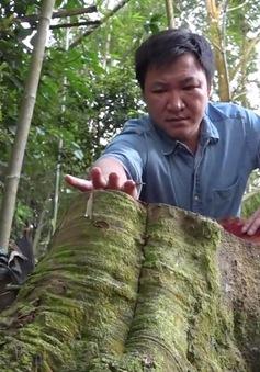 Toàn cảnh vụ phá rừng tự nhiên quy mô lớn tại Bắc Kạn (19h ngày 8/8, VTV1)