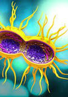 Báo động: các bệnh lây lan qua đường tình dục ở Mỹ tăng nhanh