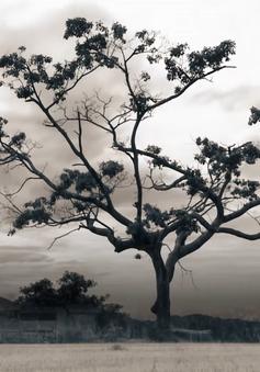 """Phim tài liệu """"Trở về quê xứ"""" (22h45 thứ 3, ngày 18/9 trên VTV1)"""
