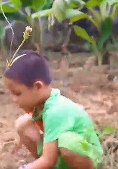Cặp lá yêu thương: Gà trống nuôi con