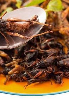 Ăn côn trùng giúp cải thiện sức khỏe đường ruột