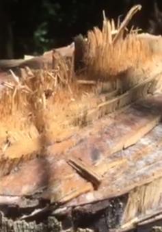 Khai thác rừng phòng hộ trái phép quy mô lớn tại Thừa Thiên Huế