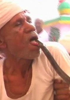 Cho rắn độc cắn vào lưỡi để cảm thấy hưng phấn