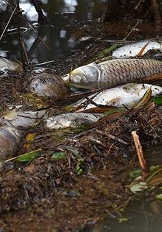 Quảng Ngãi: Mẫu nước sông Phủ đoạn xảy ra cá chết có hàm lượng thủy ngân cao