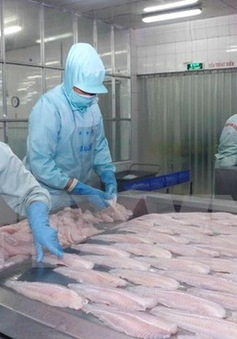 Việt Nam khiếu nại lên WTO về việc Mỹ áp thuế cá phi lê