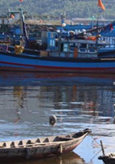 Nỗ lực hạn chế ô nhiễm môi trường tại cảng cá lớn nhất miền Trung