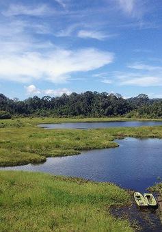 Khám phá đầm lầy nhiều cá sấu nhất Đông Nam Bộ
