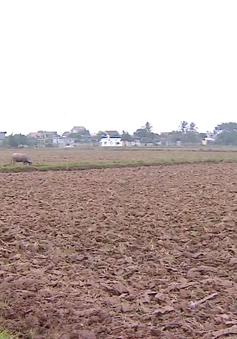 Cần có hành lang pháp lý cho tập trung ruộng đất