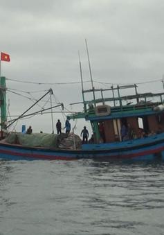 Quảng Ngãi cứu sống 8 thuyền viên trên tàu cá bị nạn tại ngư trường Hoàng Sa