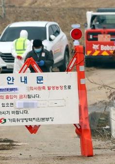 Hàn Quốc phát hiện thêm một ổ cúm gia cầm gần thủ đô Seoul