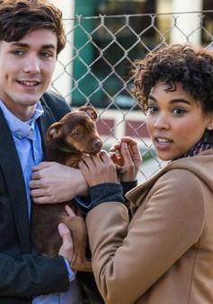 """Những thú vui cưng muốn xỉu của chú cún Bella trong phim """"Đường về nhà của cún con"""""""