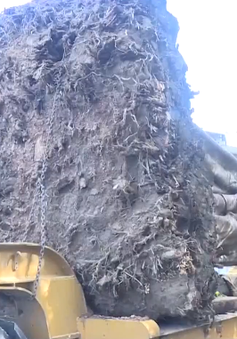 """Công an tỉnh Thừa Thiên Huế tiếp tục bắt giữ cây """"khủng"""""""