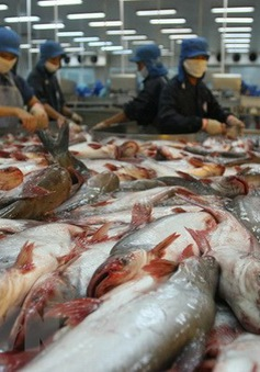 Xuất khẩu cá tra đạt mức kỷ lục 2,3 tỷ USD