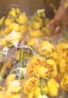 Cách chọn hoa lan ngày Tết