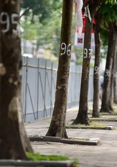 Hà Nội chi hơn 7 triệu đồng chặt mỗi cây xanh trên đường Láng