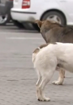 Nạn trộm chó hoành hành ở châu Âu