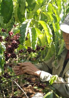 CNBC đánh giá cao sự tăng trưởng vượt bậc của Việt Nam trong xuất khẩu cà phê