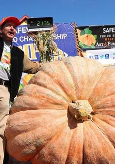 Quả bí ngô nặng gần 1 tấn mừng Halloween