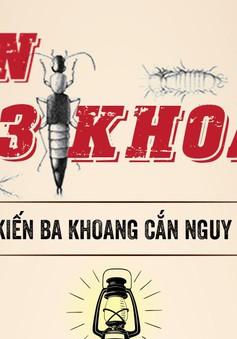[Infographic] Nọc độc của kiến ba khoang nguy hiểm thế nào?