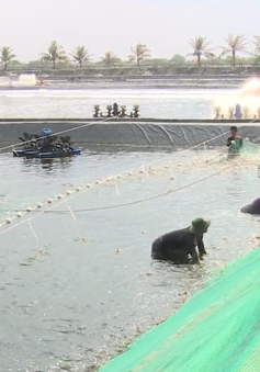 Xuất khẩu thủy sản qua Móng Cái giảm mạnh