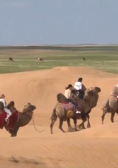 Trải nghiệm hành trình khám phá cao nguyên Kalmykia trên lưng lạc đà