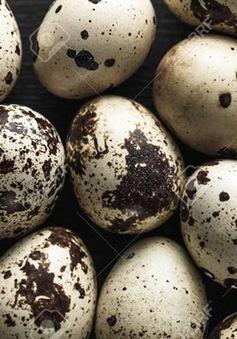 Singapore tạm dừng nhập khẩu trứng chim cút từ trang trại Malaysia