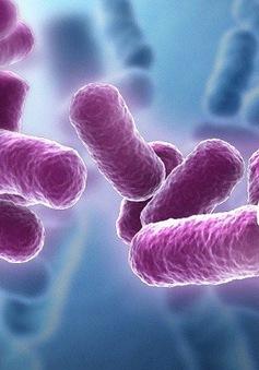 Sử dụng lợi khuẩn Bacillus - Hướng đi mới trong việc bảo vệ sức khỏe đường tiêu hóa