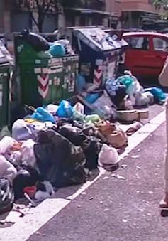 Italy: Chuột hoành hành ở Rome do khủng hoảng rác
