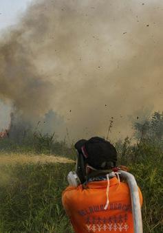 Các nước ASEAN hợp tác đối phó khẩn cấp với khói mù