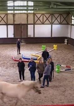 Pháp: Các công sở dùng ngựa tạo động lực làm việc