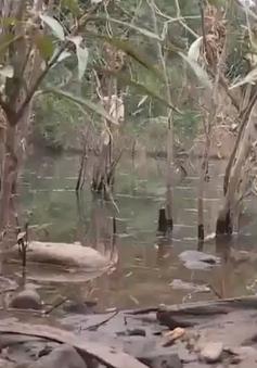 Quảng Trị: Xử lý trạm trộn bê tông nhựa xả thải ra sông Hiếu