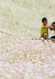 Mê đắm mùa tam giác mạch ở Hà Giang