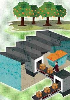 Làng công nghệ tác động xã hội – Xu hướng khởi nghiệp bền vững trong tương lai