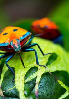 Các loài côn trùng trên Trái Đất đang bị đe dọa tuyệt chủng?