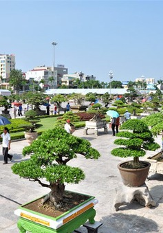 Lễ hội Bonsai và Suiseki châu Á - Thái Bình Dương lần đầu tiên được tổ chức tại Việt Nam