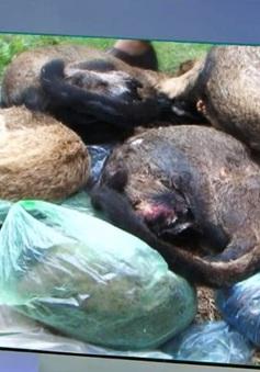 Thu giữ 47 động vật hoang dã